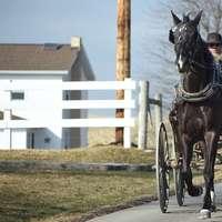 svart häst med vagn på väg under dagtid
