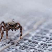 brun spindel på vit snö