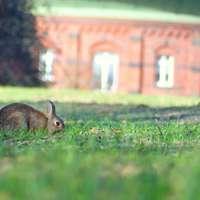 brun kanin på fältet för grönt gräs under dagtid