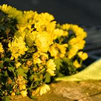 жълти цветя върху сива скала