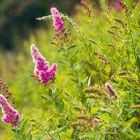 lila blomma i fältet för grönt gräs under dagtid