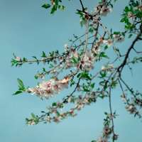 rosa blomma på grönt träd