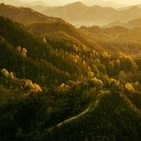 зелени дървета на планината през деня