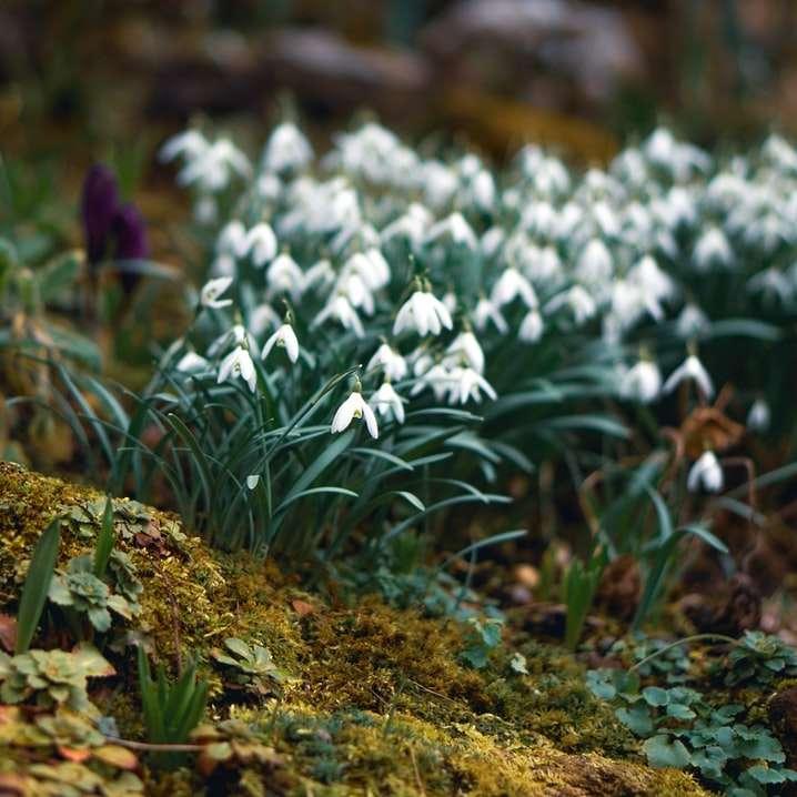 white flowers on green grass
