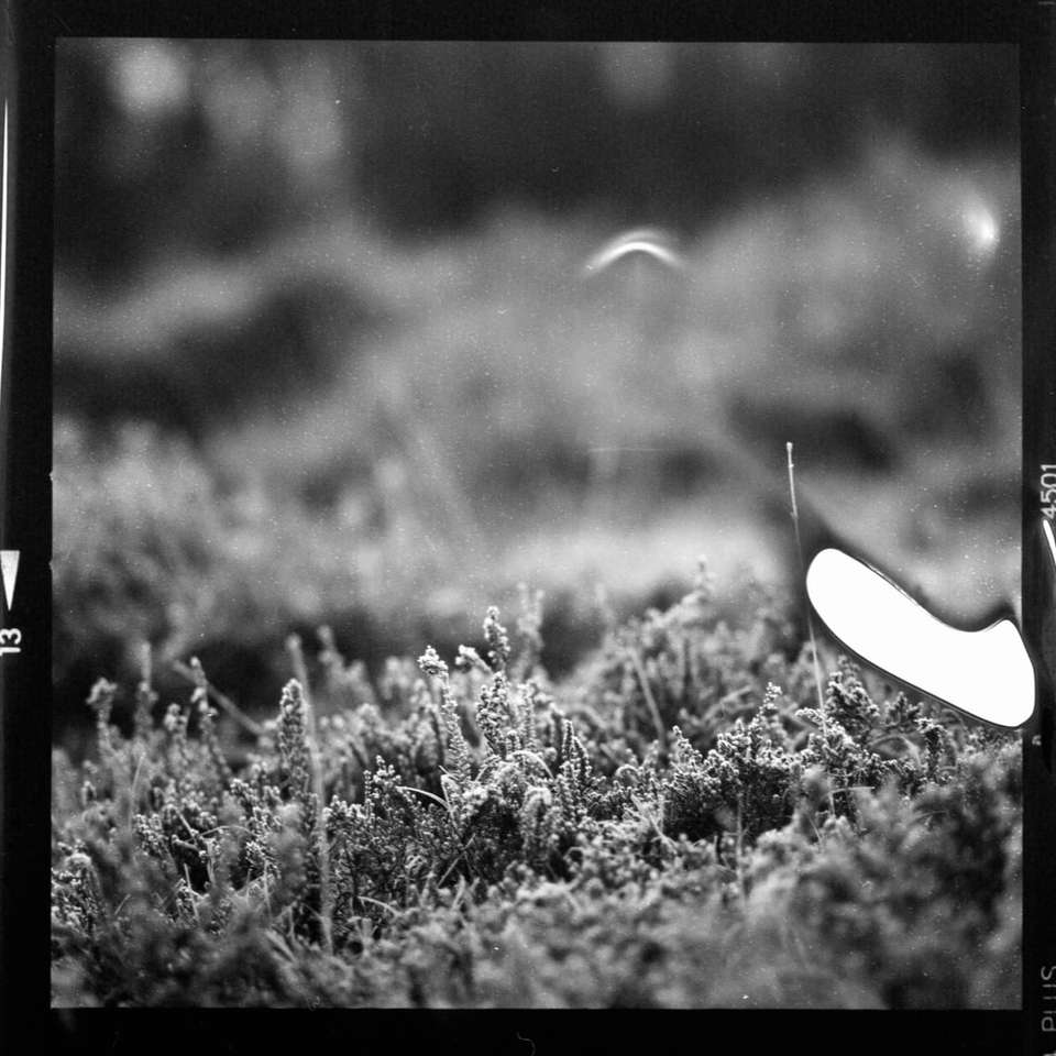 grayscale photo of grass field puzzle