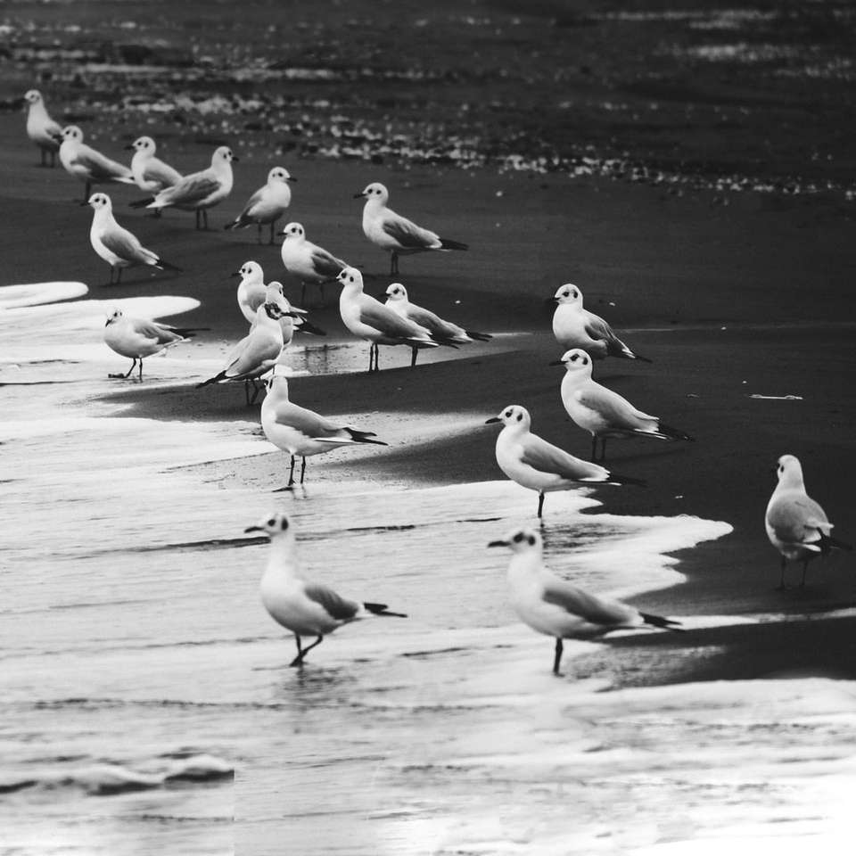 flock of birds on water during daytime online puzzle