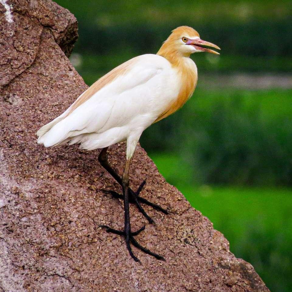 white bird on brown rock online puzzle