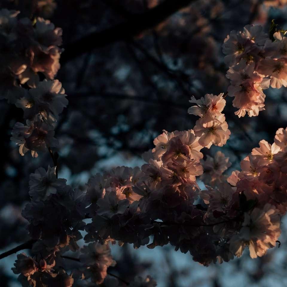 white flowers in tilt shift lens online puzzle