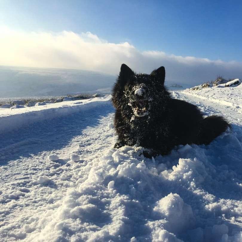 black dog on snow covered ground under blue sky