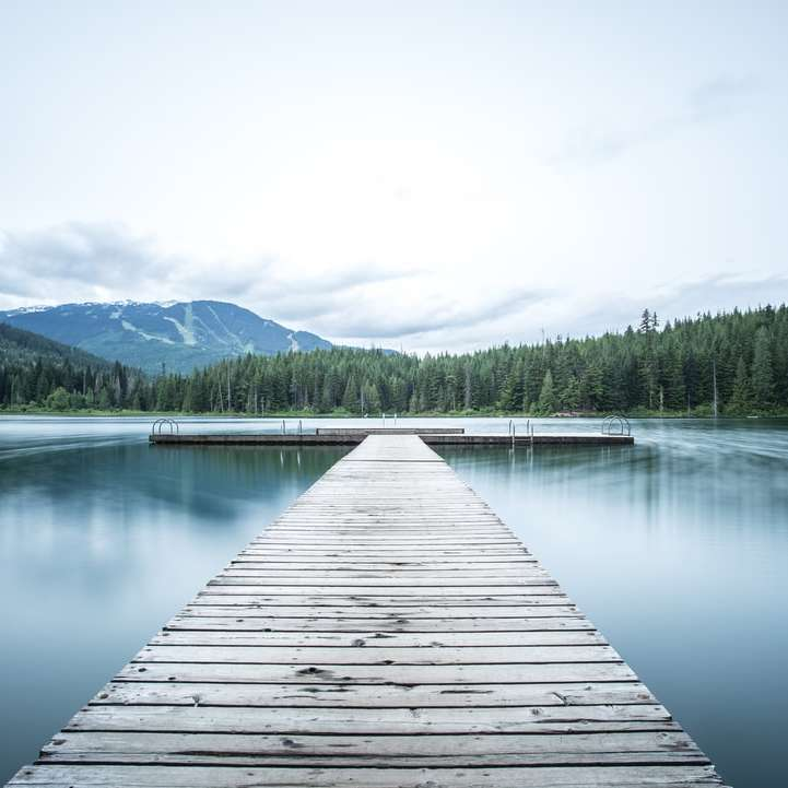 gray wooden sea dock near green pine trees under white sky
