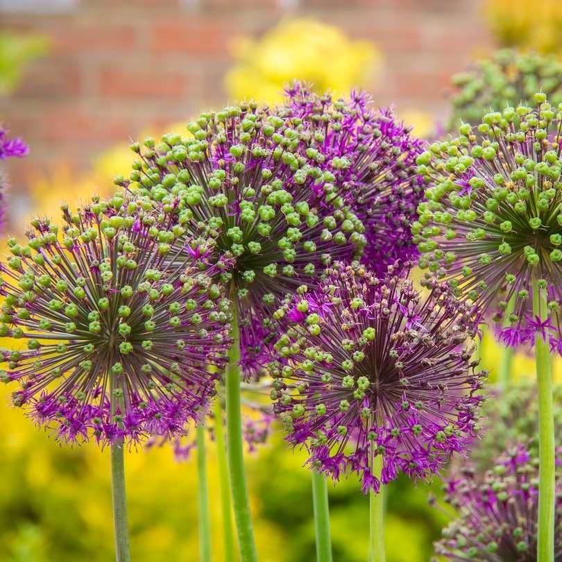 selective focus photography of purple petaled flower