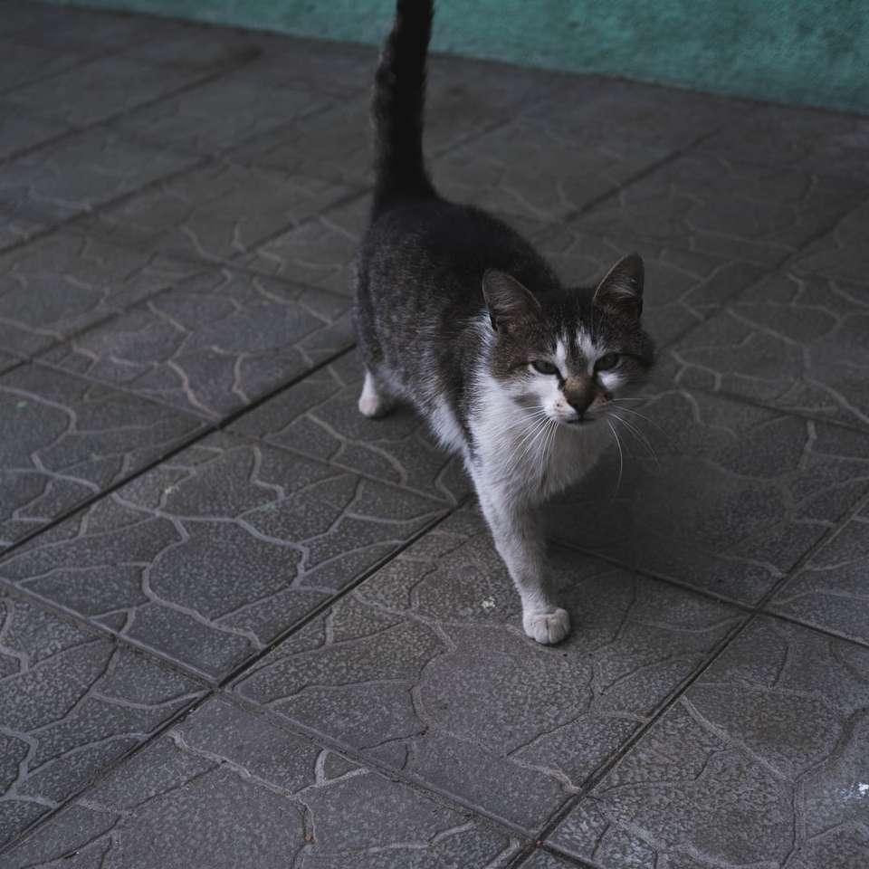 white and black cat on gray concrete floor