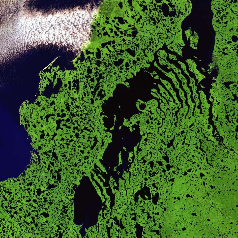 grass satellite illustration