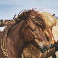 three brown horses puzzle