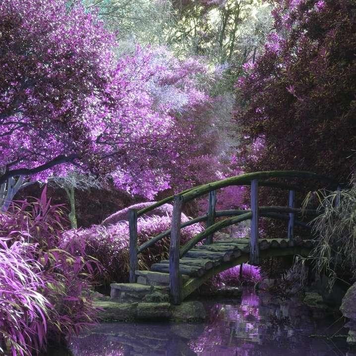 brown wooden footbridge surrounded by pink petaled flowers