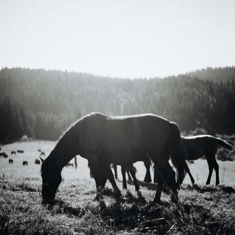 black horse on brown soil during daytime